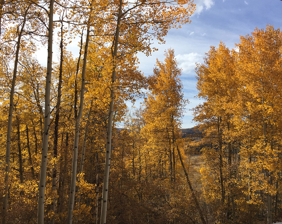 Aspen Fall tree colors